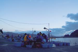 ホタテの選別風景