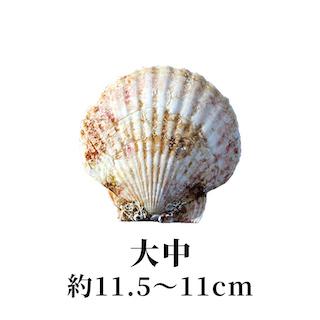 大中 11.5〜11cm