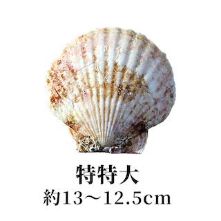 特特大 13〜12.5cm