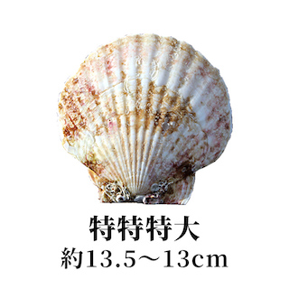 特特特大 13.5〜13cm