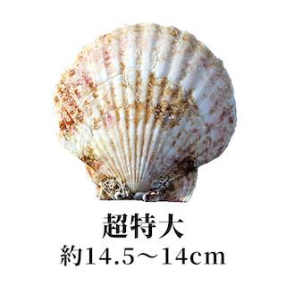 超特大 14.5〜14cm